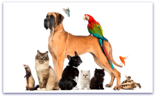 All Creatures Pet Sitting Phoenix Az.
